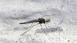 Fungus Gnats Attracted To Light How To Get Rid Of Gnats In Your House The Definite Guide