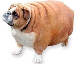 「肥満」の画像検索結果