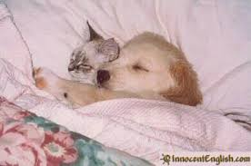 kittens and puppies sleeping.  Puppies Funny Kitten And Puppy Sleeping Photos Throughout Kittens And Puppies Sleeping P
