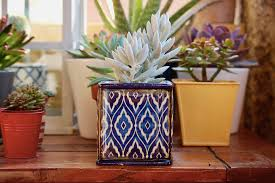 Feng shui home elements plants Wealth Feng Shui And Beyond Top Feng Shui Plants For Your Home And Office