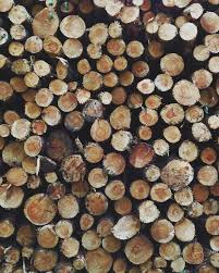 outdoor woods backgrounds. Raw Cut Wood. Outdoor Woods Backgrounds K