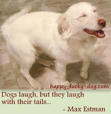 Dog Quotes Inspirational Stunning Inspirational Dog Quotes To Warm The Heart