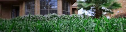 Turf Disease Lawn Disease Control Scotts
