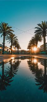 We have collected 3380 iphone wallpapers, all wallpapers are available for free download. Palm Tree Iphone 11 Hd Wallpapers Ilikewallpaper