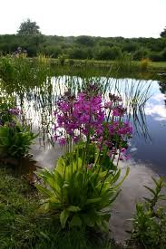 Small Picture Primula in natural wildlife pond garden design by Jason Russell