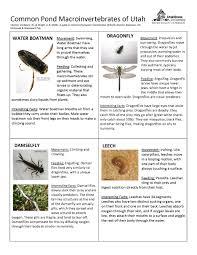Aquatic Macroinvertebrate Lesson Plans