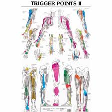 Smoulders Trigger Point Charts I And Ii Set Of Two Posters Body Best