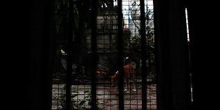 the view from debapriya s window in kolkata india by night