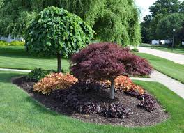 Landscaping Ideas For Front Yard Around Tree Nice And Simple Trees Easy  Simple ...