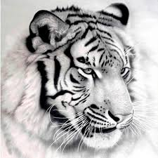 100% Full 5D Diy Daimond Painting Siberian <b>tiger 3D</b> Diamond ...