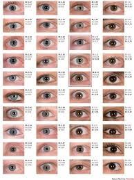 Eye Colour Prediction Chart Figure 3 Dna Based Prediction Of Human Eye Colour