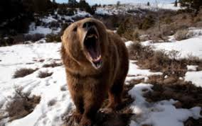 Картинки по запросу картинки медведь