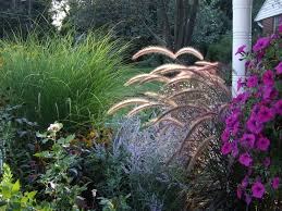 add interest to your lawn with ornamental grasses