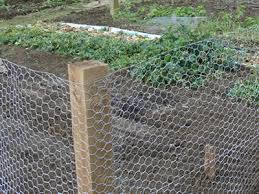 chicken wire garden fence. Chicken Wire - Garden Fence Material Protects Your Plants