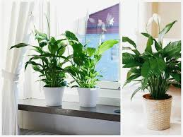 ... Bathroom:Cool Good Bathroom Plants Decorations Ideas Inspiring Fancy  Under Home Interior Creative Good Bathroom ...