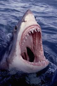 shark attack on humans. Brilliant Humans Letu0027s Hope This Isnu0027t The Last Thing  On Shark Attack Humans