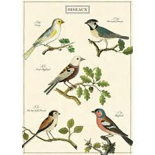 French Birds Chart Vintage Style Bird Watching Poster