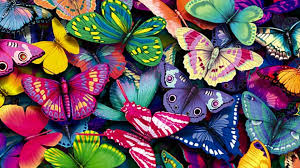 colorful butterfly wallpapers. Contemporary Colorful HDTV 169 Intended Colorful Butterfly Wallpapers A