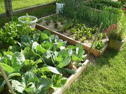 Small Picture Small Backyard Vegetable Garden House Design With DIY Wood Raised