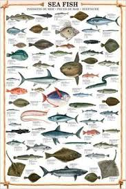Sea Fish Wall Chart 59 Saltwater Species Poster