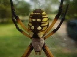 Spider Identification Lovetoknow