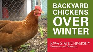 Backyard Chickens How To Keep Your Chickens In Winter  YouTubeHow To Keep Backyard Chickens