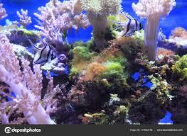 Aquarium Background Pictures Sea Aquarium Background Stock Photo Jonnysek 172022156