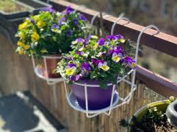 pots for balcony plants choosing
