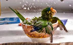 Tierische Tipps Gegen Hitzschlag Gerrys Blog
