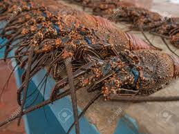 Blue Lobster For Sale In A Stall ...