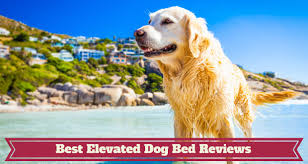 the best elevated cooling dog beds 2018 perfect for large dogs