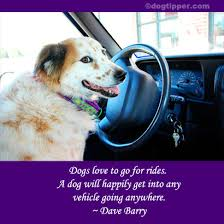 Quotes About Dogs Love Unique Famous Dog Travel Quotes