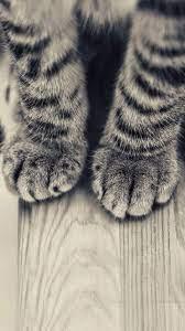 Striped Kitten Legs Wooden Floor ...