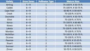 Pecan Size Chart Pecan Tree Grow Guide Pecan Trees Online Perfect Plants
