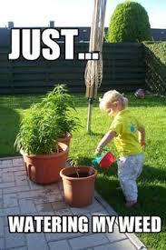 Marijuana Meme on Pinterest | Weed Memes, Stoner and Weed via Relatably.com