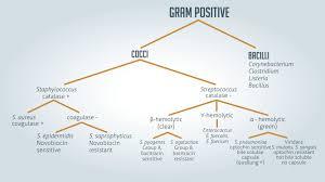 Gram Positive Vs Gram Negative Technology Networks