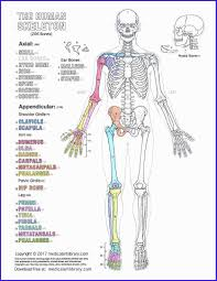 The anatomy coloring book book. Incredible Free Anatomy Coloring Book Pdf Madalenoformaryland