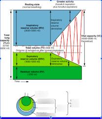Chart Diagram Quizlet