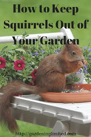 how to keep squirrels out of garden. How To Keep Squirrels Out Of Your Garden F