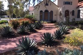 drought tolerant low maintenance garden
