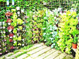 container garden vegetables. Creative Recycled Bottle Plastic For Container Gardening Vegetables And Herbs Mounted On The Wire Fence With Garden T