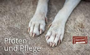 Auch wenn wir zu besuch sind. Pfoten Und Pflege Haltung Von Hunden Hunde Ratgeber Ratgeber Pets Nature Online Shop