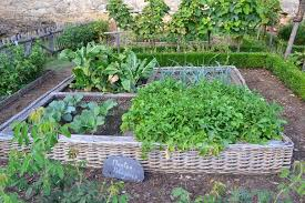 vegetable garden layout ideas and tips