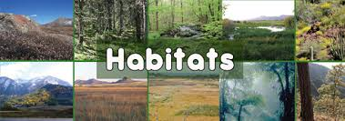 Image result for habitats ks1