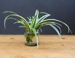 grow indoor plants in glass bottles apieceofrainbow 4