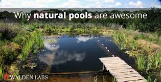 why i love natural swimming pools and how to build one