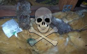 rat poison pellets home depot. Rat Poison Home Depot Trap Bait D Con Canada . Pellets O