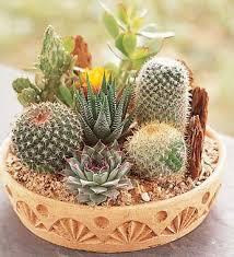 Small Picture Best 20 Indoor cactus garden ideas on Pinterest Indoor cactus