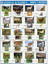 Chart Lumbini Educational Material And Map Publications