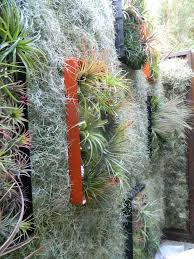 Small Picture 160 best Tillandsia images on Pinterest Air plants Vertical
